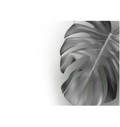 black and white monstera leaf abstract background vector image