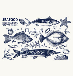 fishes and spices set vintage hand drawn seafood vector image