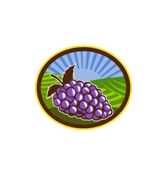 Grapes Vineyard Farm Oval Woodcut vector