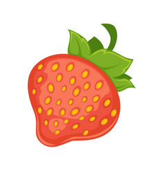 sweet delicious ripe strawberry with leaves vector image vector image