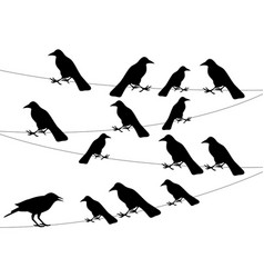 a flock of crows on the wire vector image
