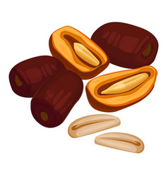 Delicious sweet healthy dates fruits with oblong vector