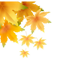 banner autumn falling leaves template background vector image