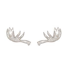 Decorative drawing elk or moose palmate antlers vector