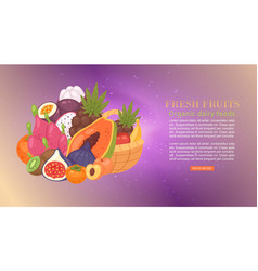 fresh tropical fruit cartoon vector image