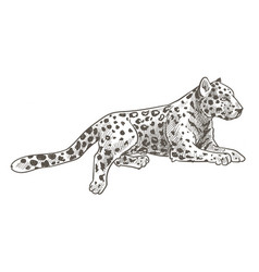 Leopard animal laying calm cheetah with tail vector