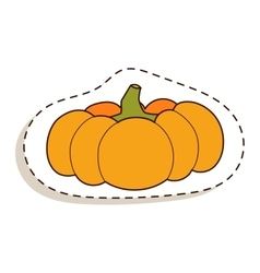 Pumpkin isolated vector image