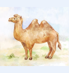 Vintage of standing camel on desert background vector