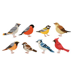 wild forest birds winter wildlife animal birds vector image