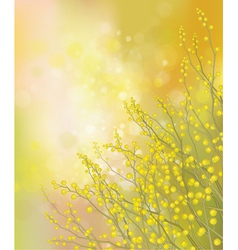 mimosa background vector image