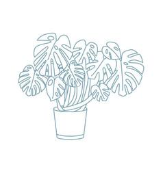elegant drawing of monstera growing in pot exotic vector image