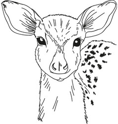 head deer drawn contour black coloring vector image