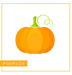 isolated orange pumpkin memory training card vector image