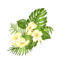 label with plumeria flowers bouquet aromatic vector image