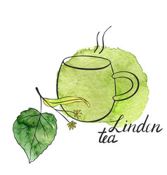 linden tea vector image