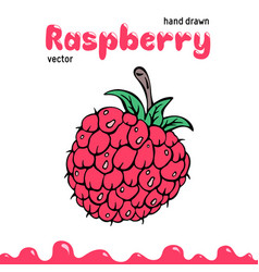 raspberry berry clipart vector image