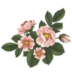 Wild rose vector image