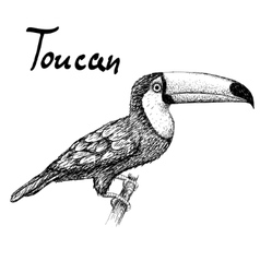 toucan sitting on branch vector image vector image