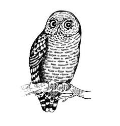 owl bird engraving vector image