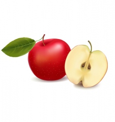 apple red with leaf vector image