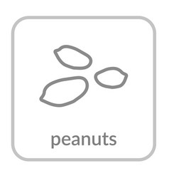 peanut seed icon groundnut outline flat sign vector image