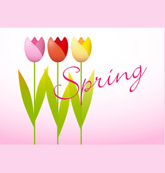 three spring tulips vector image