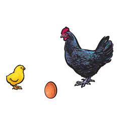 brown egg chick and rooster sketch set vector image