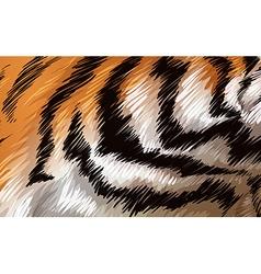 A tiger texture vector