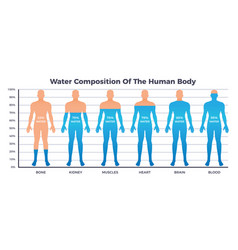 Body and water chart vector