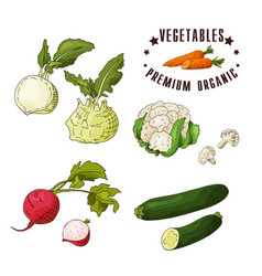 hand drawn vegetarian isotaled vector image