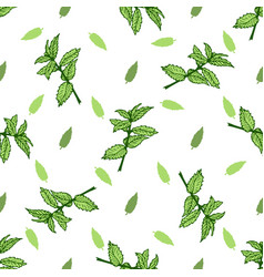 sketch herbal mint tea hand drawn seamless pattern vector image