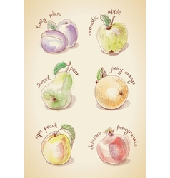 Vintage set of fruits vector image