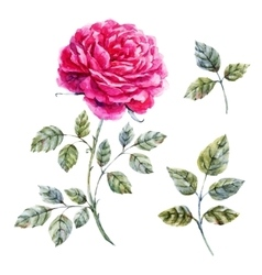 Watercolor hand drawn rose vector