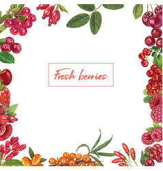 fresh berries hand drawn frame vector image