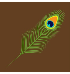 Peacock feather Exotic tropical bird colorful tail vector image