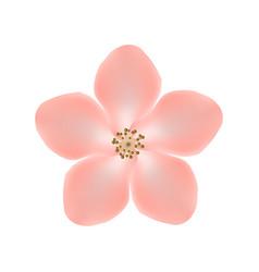 sakura flower isolated on white background eps10 vector image