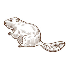 Beaver forest animal isolated sketch wild species vector