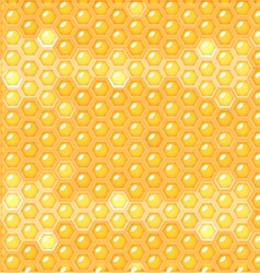 fluid honey in honeycomb vector image