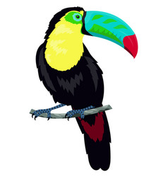 toucan isolated on white vector image