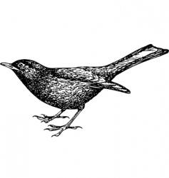 Eurasian blackbird vector image vector image
