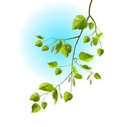 realistic branch of birch vector image vector image