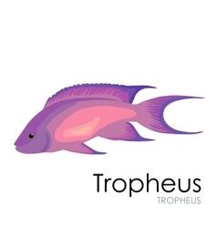 Aquarium fish Tropheus vector image