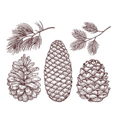 Hand drawn forest sketched pine branches vector