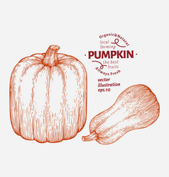 Pumpkin set hand drawn vegetable engraved style vector