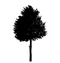 Tree Silhouette Isolated on White Background vector image