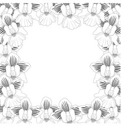 vanda miss joaquim orchid outline border vector image