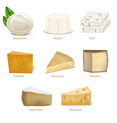 Realistic detailed 3d cheese different types set vector