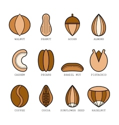 Set of flat colored icons with different nuts vector image
