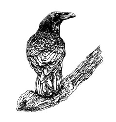 hand-drawn raven in vintage style vector image