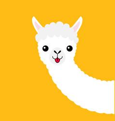 Llama alpaca animal face neck cute cartoon funny vector